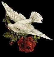 الصورة الرمزية الشاعر