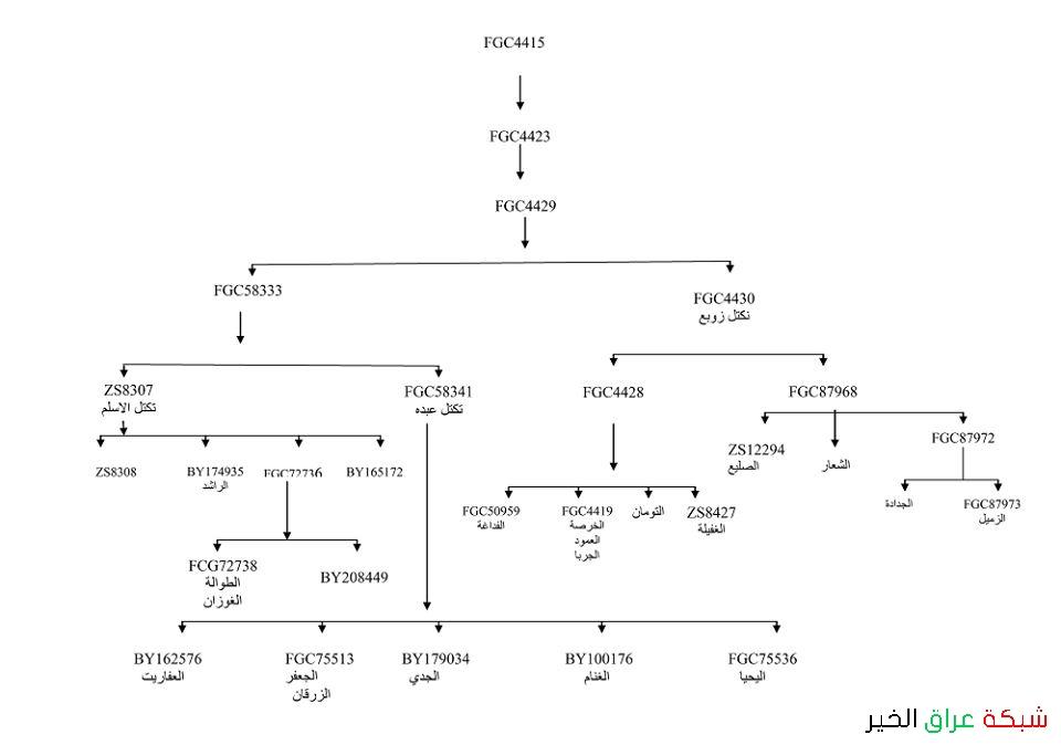 مشجرة لتحور fgc4429 تحورات السلالة