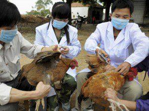 انفلونزا-الطيور