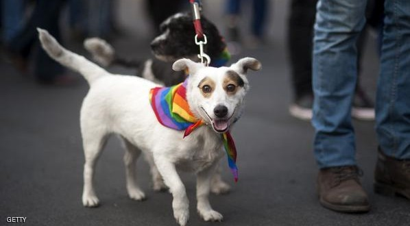 "A reveler takes part in the ""Proud to be yourself"" gay pride parade with his dogs in Santiago on June 27, 2015. AFP PHOTO/VLADIMIR RODAS        (Photo credit should read VLADIMIR RODAS/AFP/Getty Images)"