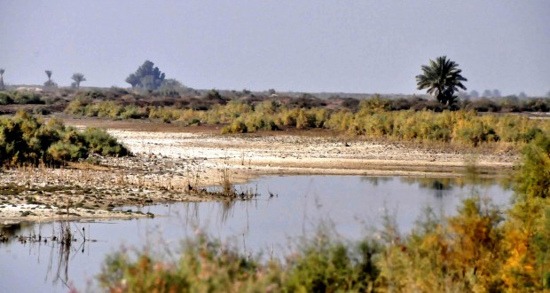 died-river-in-south-of-iraq1
