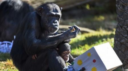 صور: هدايا عيد الميلاد للحيوانات في أستراليا