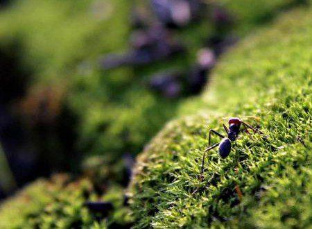 ant_750x586_572899378
