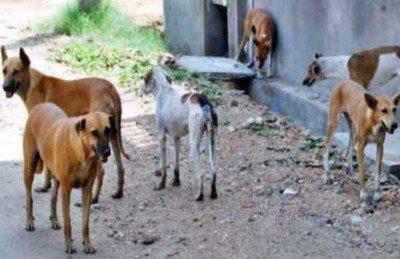 الكلاب المسعورة كأسلوب جديد في قتل وتعذيب اهالي الموصل