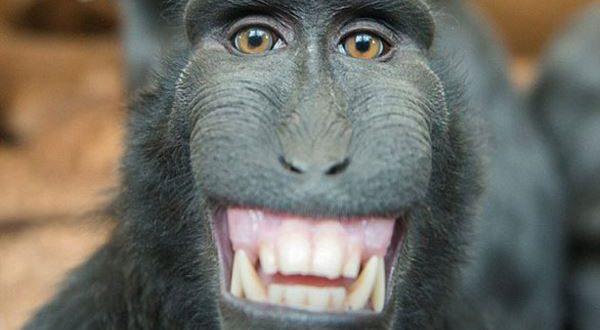 monkey(4)