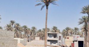 الكعبي تحويل جنس الاراضي يعطي حرية واسعة للمحافظات وامانة بغداد